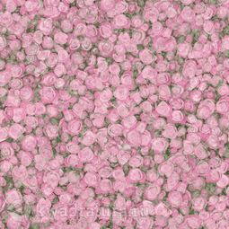 Линолеум TARKETT (FLEUR) Rose 2